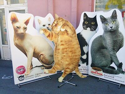 ростовая фигура коты